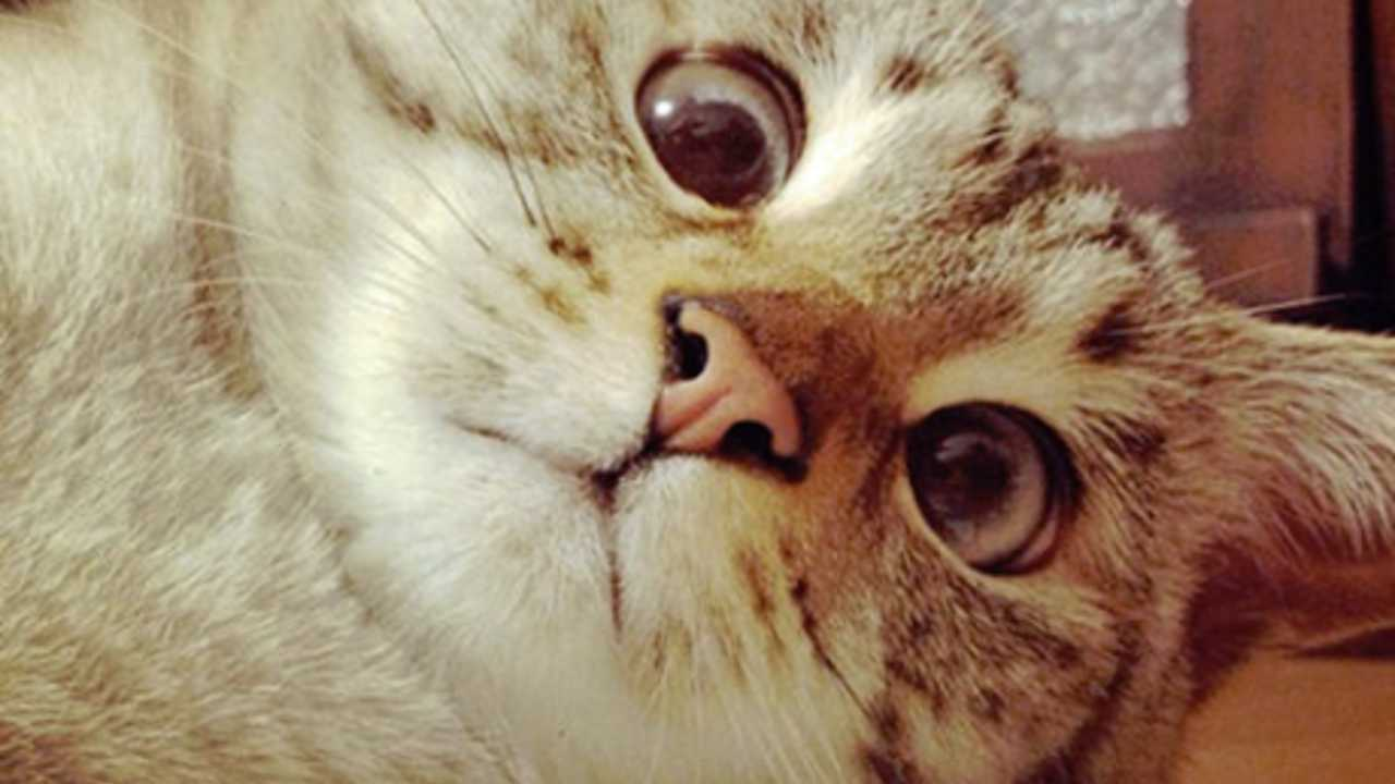 of 62 Super Cute Cats SC