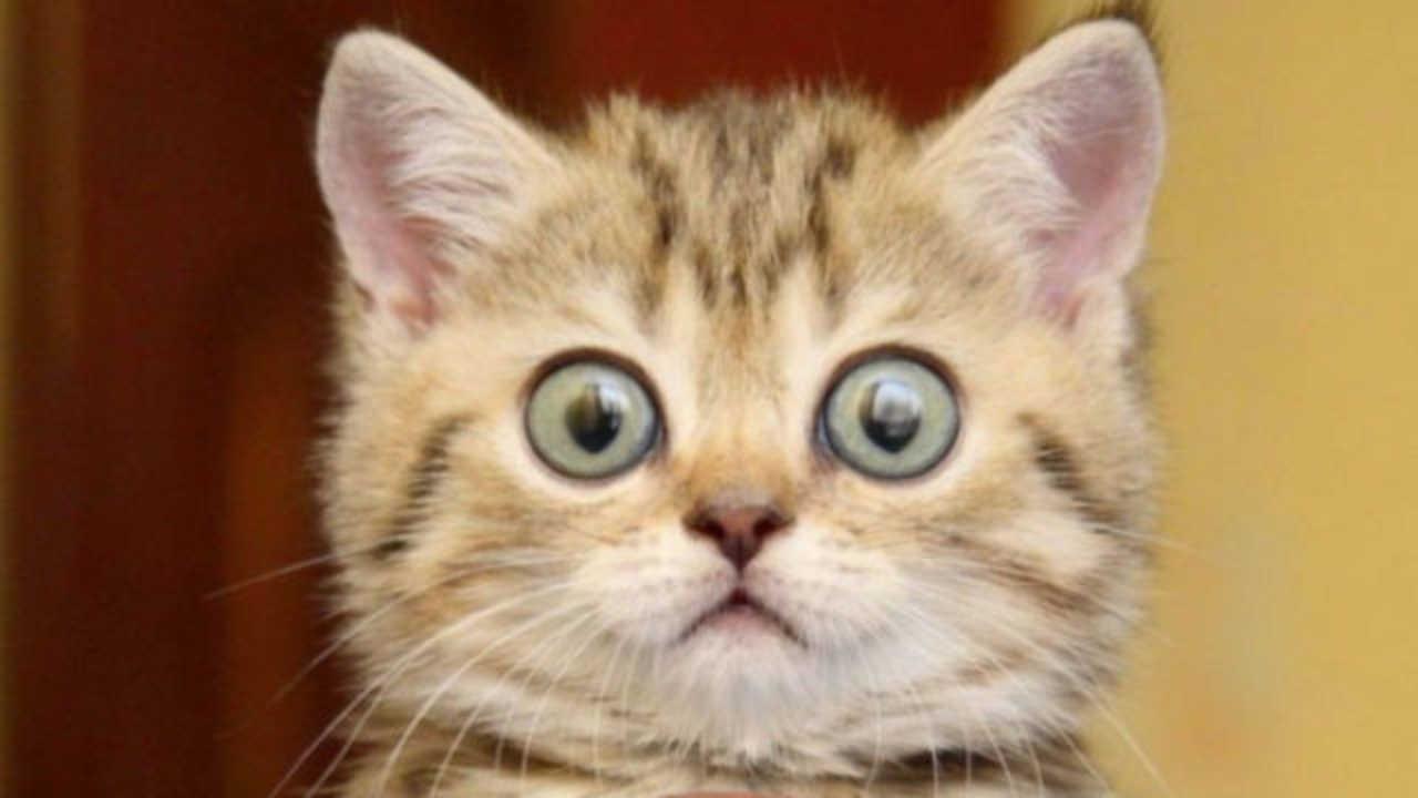 Terrified Cat Meme