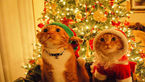 Rsz cute christmas animals 24