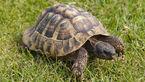 Tortoisefeat